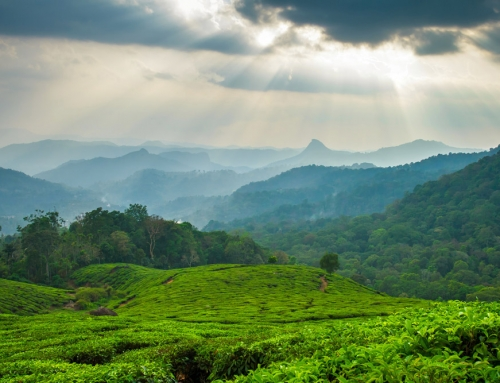 Discover Wayanad
